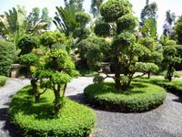 Bonsai Zone at the Phuket Botanic Garden